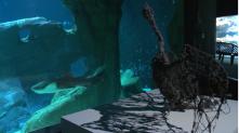 Capture Aquarium